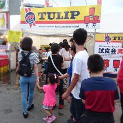 tulip_imege4